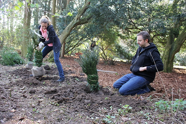 Ehrenamtlich Bäume pflanzen