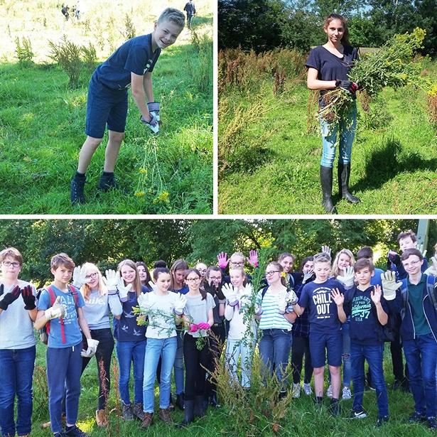 Schülerprojekte: Schülerinnen und Schüler bekämpfen Neophyten in einem Naturschutzgebiet.